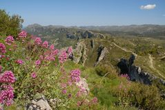 Pink wildflowers in the mountains, Spain royalty free stock photography