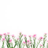 Pink wildflowers on white background Stock Photo