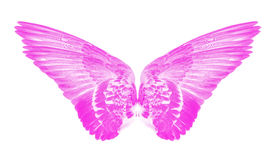 Pink wings of birds stock photography