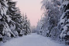 Pink winter scene. Wonderful pink winter dawn in forest Stock Photo