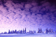 Pink Winter Twilight. Winter red sky with cirro-cumulus clouds stock photos