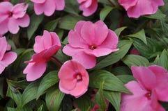 Pink is wonderful royalty free stock image