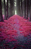 Mystic Wonderland. A pink forest under a spell Royalty Free Stock Photography