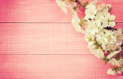 Pink wooden background with flowering sweet cherry branches. Toned image.  stock image