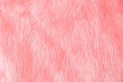 Pink wool texture Royalty Free Stock Photo