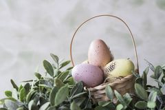 Pink and yellow Easter eggs in wicker basket. Space for text stock images