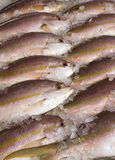 Pink and yellow fish on market stall, London. Royalty Free Stock Photography