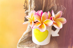 Pink yellow flower plumeria or frangipani in lovely heart patter. N cup on timber stock images