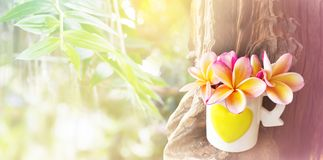 Pink yellow flower plumeria or frangipani in lovely heart patter. N cup on timber on nature garden and tree background with bokeh stock image