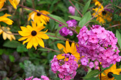 Pink and yellow flowers Royalty Free Stock Photo