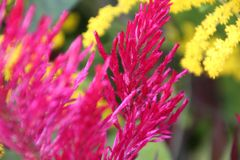 Pink and Yellow flowers Growing Stock Images