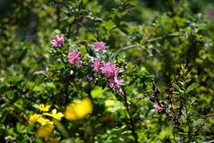 Flowers in the Antisana Ecological Reserve Royalty Free Stock Image