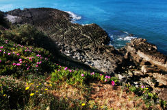 Pink and Yellow Flowers and Ocean Cliffs Royalty Free Stock Photos