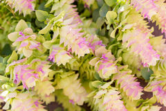 Pink and Yellow Flowers. These pink and yellow flowers pour themselves across the frame.  A beautiful fit for a background or slide presentation Stock Photo