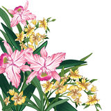 Pink and yellow flowers on a white background Royalty Free Stock Images