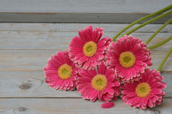 Pink yellow  gerbera daisies in a border row on grey old wooden shelves background with empty copy space Royalty Free Stock Photo