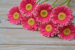 Pink yellow  gerbera daisies in a border row on grey old wooden shelves background with empty copy space Royalty Free Stock Images