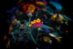 Brightly Colored Flowers stock photo
