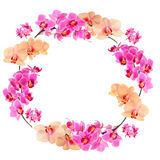 Pink and yellow orchids frame. Frame made from Phalaenopsis orchids, isolated on white Stock Photo
