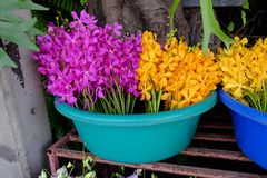 Pink and yellow orchids. Outdoor orchid sales in street market, Bangkok, Thailand royalty free stock photos