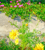 Pink and yellow Stock Images