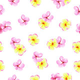Pink and yellow plumeria flowers seamless vector pattern Royalty Free Stock Photography