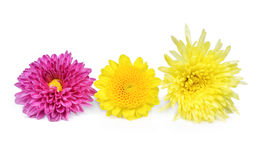 Pink ,yellow and Purple Flower Isolated on White Royalty Free Stock Image