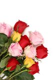 Pink, yellow and red roses Stock Photo