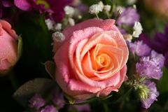 Pink and yellow rose in beautiful bouquet. spring flowers on a g stock photos
