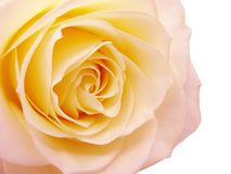 Pink and yellow rose heart closeup Royalty Free Stock Image