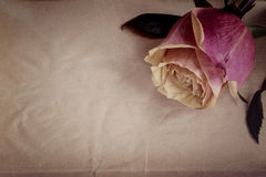 Pink-yellow rose on the slate dark-grey background. Top view. Vintage. Stock Photo