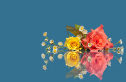 Pink and yellow rose with white wild flowers Royalty Free Stock Photography