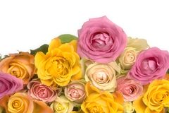 Pink and yellow roses Stock Image
