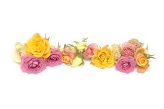 Pink and yellow roses Royalty Free Stock Images