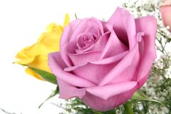 Pink and yellow roses. Decorative flower bouquet with pink and yellow roses in foreground Royalty Free Stock Images