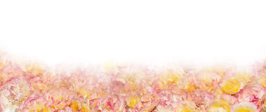 Pink yellow roses banner,isolated Stock Photos