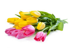 Pink and yellow tulip Royalty Free Stock Image