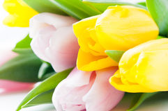 Pink and yellow tulips Stock Photos