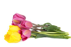 Pink and yellow  tulips bouquet Royalty Free Stock Photo