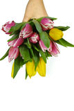 Pink and yellow tulips bouquet in hand on white background isola Stock Photo