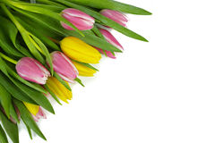 Pink and yellow tulips bouquet on white background isolated Royalty Free Stock Image