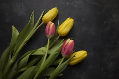 Pink and Yellow Tulips Stock Photo