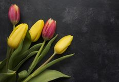 Pink and Yellow Tulips Royalty Free Stock Photos