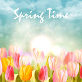 Pink and yellow tulips spring. Pink and yellow tulips and sunlight on sky. Spring flower background Stock Photos