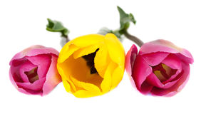 Pink and yellow  tulips on the white Royalty Free Stock Image