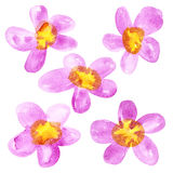 Pink - yellow watercolor flowers Stock Photography