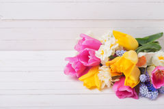Pink, yellow, white  and blue spring tulips  and daffodils flowe Stock Photo