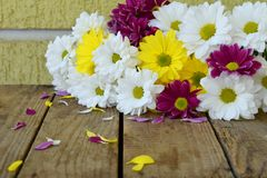Pink, yellow and white chamomile flowers. Birthday, Mother`s day, Valentine`s Day, March 8, Wedding card or invitation. Floral d Stock Photo