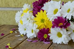 Pink, yellow and white chamomile flowers. Birthday, Mother`s day, Valentine`s Day, March 8, Wedding card or invitation. Floral d. Ecorative festive background Royalty Free Stock Images