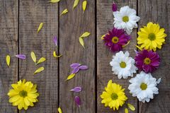 Pink, yellow and white chamomile flowers border. Birthday, Mother`s day, Valentine`s Day, March 8, Wedding card or invitation. royalty free stock images